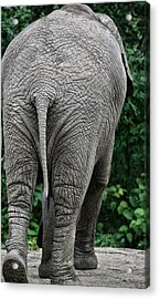 To The Rear March Acrylic Print by Karol Livote