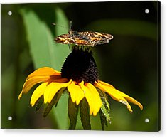 To Top It Off Acrylic Print by Steven Reed
