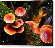 Acrylic Print featuring the photograph Toadstool Forest by David Rich