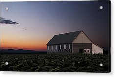 Tobacco Field Acrylic Print