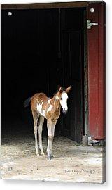 Toccoa At The Barn Acrylic Print by Kenny Francis