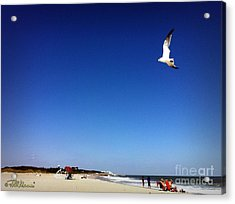 Acrylic Print featuring the photograph Today I Will Soar Like A Bird by Phil Mancuso