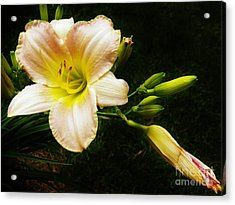 Today's Lillie  Acrylic Print by Judy Via-Wolff