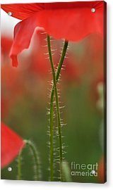 Acrylic Print featuring the photograph Together Forever by Simona Ghidini