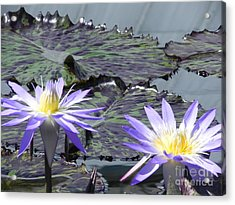 Together Is Beauty Acrylic Print by Chrisann Ellis