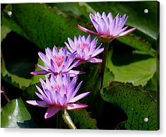 Acrylic Print featuring the photograph Together We Bloom - Violet Lily by Ramabhadran Thirupattur