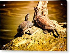 Together We Acrylic Print by Venura Herath