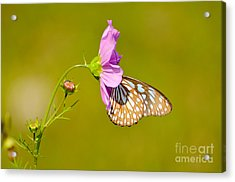 Togetherness Acrylic Print by Fotosas Photography