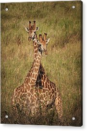 Acrylic Print featuring the photograph Togetherness by Kim Andelkovic