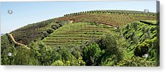 Tokara Vineyard, Delaire Graff Estate Acrylic Print by Panoramic Images