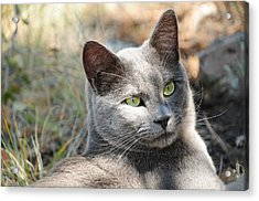 Tom Cat Acrylic Print
