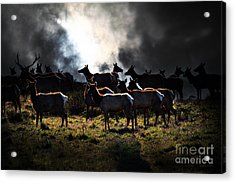 Tomales Bay Harem Under The Midnight Moon - 7d21241 Acrylic Print by Wingsdomain Art and Photography