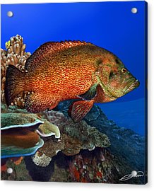 Tomato Grouper Acrylic Print by Owen Bell