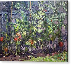 Tomatoes In Viola's Garden  Acrylic Print