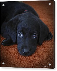 Acrylic Print featuring the photograph Too Cute by Phil Abrams