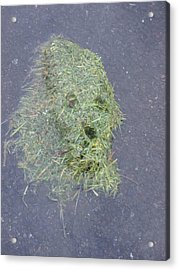 Acrylic Print featuring the photograph Too Much Grass Man by Marie Neder