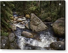 Acrylic Print featuring the photograph Tooronga River by Kim Andelkovic