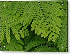 Toothed Ferns Acrylic Print