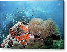Toothy Reef Acrylic Print by Nature, Underwater And Art Photos. Www.narchuk.com