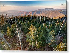 Top Of The Dome Acrylic Print by Scott Moore