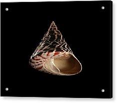 Top Snail Shell Acrylic Print