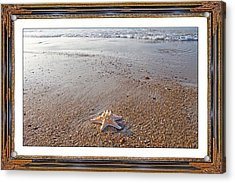 Topsail Island The Only One Acrylic Print by Betsy Knapp