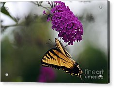 Acrylic Print featuring the photograph Topsy Turvy by Judy Wolinsky