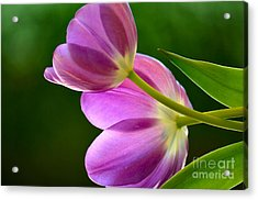 Topsy-turvy Tulips Acrylic Print by Deb Halloran