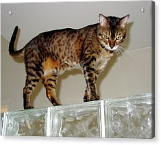 Acrylic Print featuring the photograph Tora On Glass II by Phyllis Kaltenbach