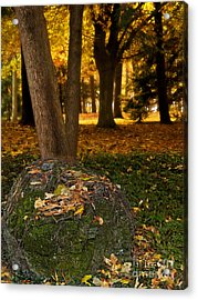 Torch Of Autumn Acrylic Print by Lee Craig