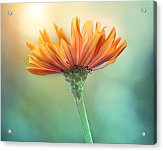 Torch Song Acrylic Print by Amy Tyler