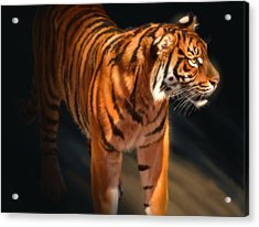 Acrylic Print featuring the digital art Torch Tiger 4 by Aaron Blaise