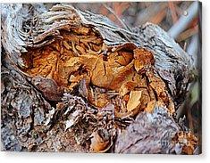 Torn Old Log Acrylic Print