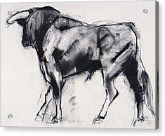 Toro Azul   Study Acrylic Print by Mark Adlington