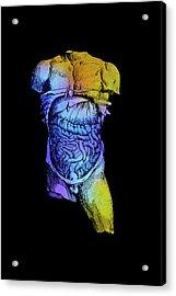 Torso Of Plate 55 Acrylic Print