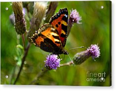Tortoise Shell Butterfly Acrylic Print