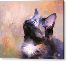 Tortoiseshell Kitten #3 Acrylic Print