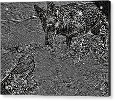 Tortuga Duel Acrylic Print by Robert Rhoads