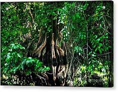 Tortuguero River Acrylic Print by Gary Keesler