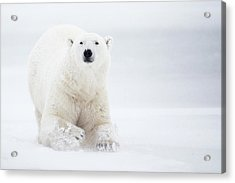 Total White Acrylic Print