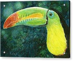 Toucan Acrylic Print by Sandra LaFaut