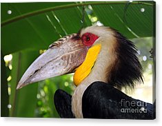Acrylic Print featuring the photograph Toucan by Sergey Lukashin