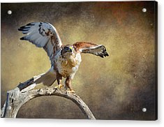 Touch Down Acrylic Print by Barbara Manis