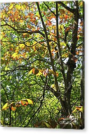 Touch Of Autumn Acrylic Print by Ann Horn