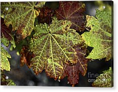 Touch Of Autumn Acrylic Print