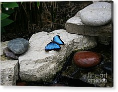 Touch Of Blue Acrylic Print by Judy Whitton