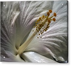 Touch Of Pink Acrylic Print by Jill Balsam