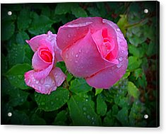 Touch Of Pink Acrylic Print by Nick Kloepping