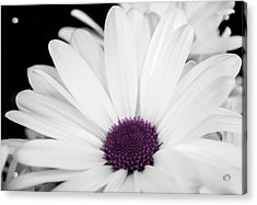 Touch Of Purple Acrylic Print by Xenia Headley