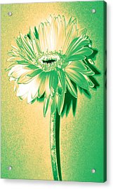 Touch Of Turquoise Zinnia Acrylic Print by Sherry Allen